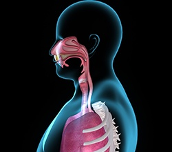 Animation of the airway and lungs
